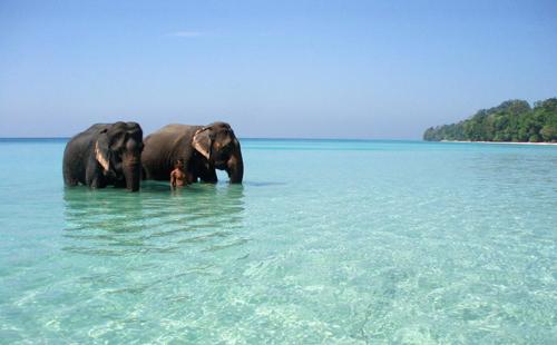 mejores playas del mundo Radhanagar Beach Isla Havelock en India trending magazine