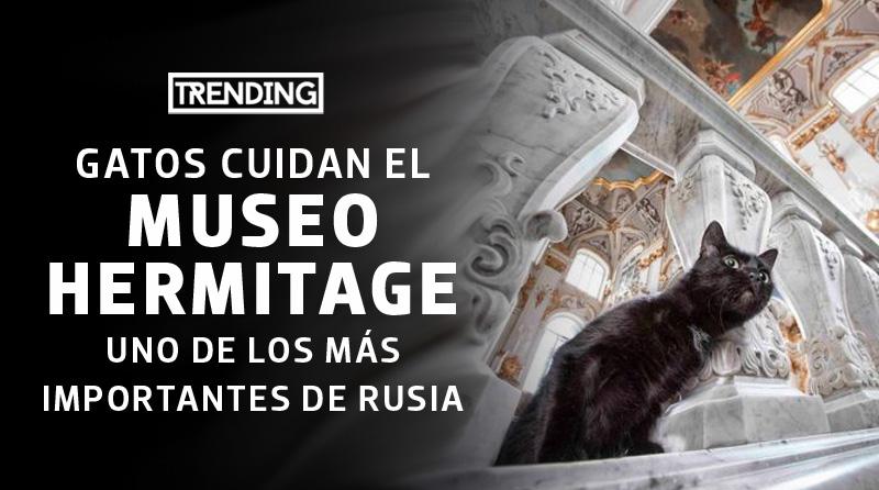 curiosidades de rusia datos curiosos gatos en el museo hermitage trending magazine revista